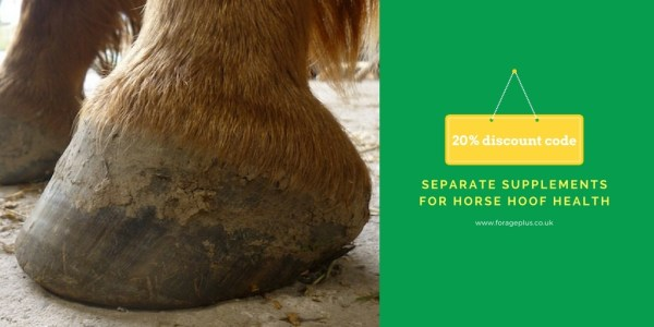 separate-supplements-for-horse-hoof-health