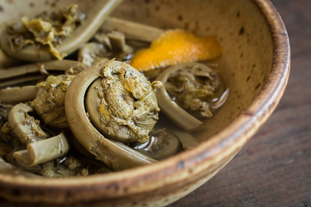 Crunchy pickled fiddlehead fern recipe