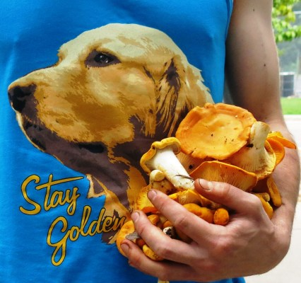 Stay Golden 1
