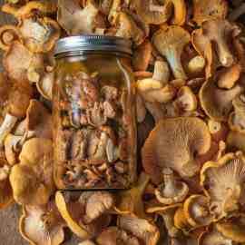 Chanterelle Mushroom Conserve