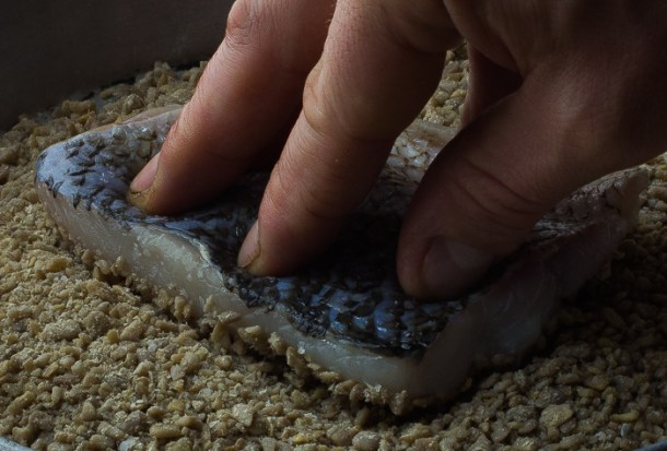 crusting whitefish with sunflower seeds