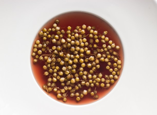 milkweed capers