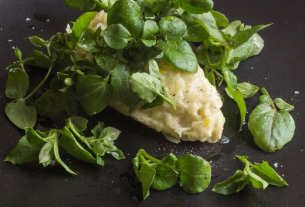 celery root salad with watercress and chickweed