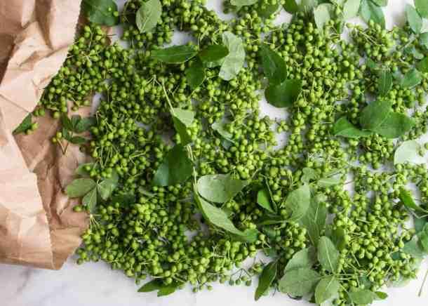 Green Zanthoxylum-wild Szechuan Peppercorns