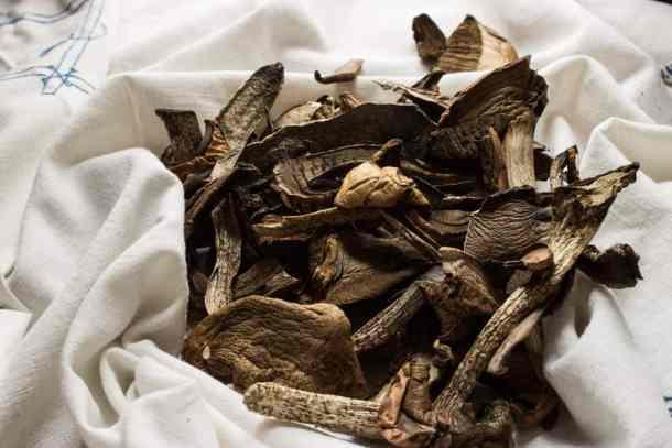 Leccinum Mushrooms Scaber Stalk