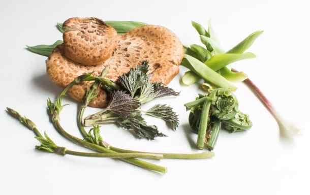 Dryad Saddle Mushrooms and WIld Spring Vegetables