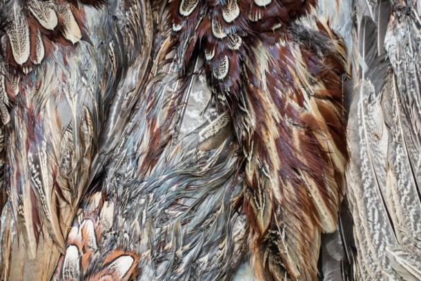 Sharp-Tail Grouse and Pheasant