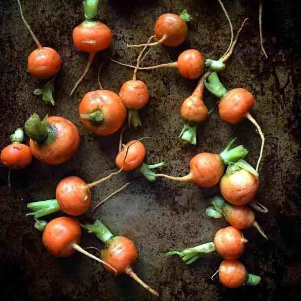 romeo carrots, heirloom carrots