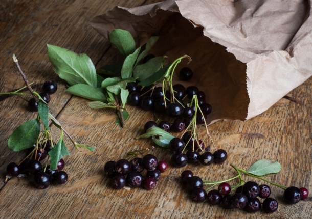 chokeberry-or-aronia-berry_