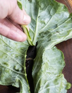 removing the rib from broccoli leaves