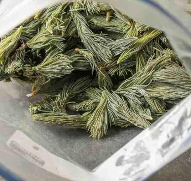 Spruce Tips, Frozen_