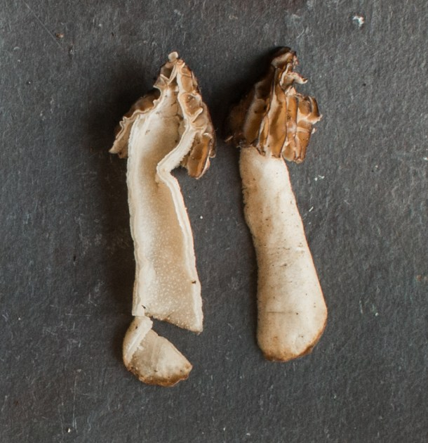 Half-Free Morel Mushrooms (Peckerheads)