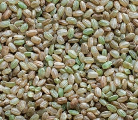 Krasnodarskij 3352 rice