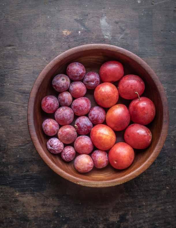 Canadian and American wild plums Prunus americana Prunus nigra