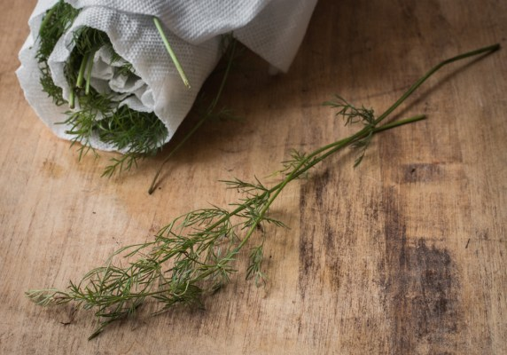 Wild caraway leaves