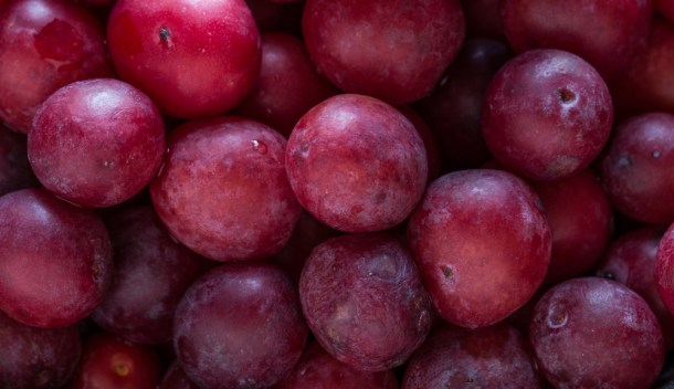 Foraged minnesota plums