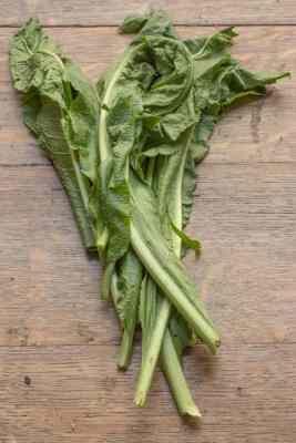 Wild horseradish leaves or greens