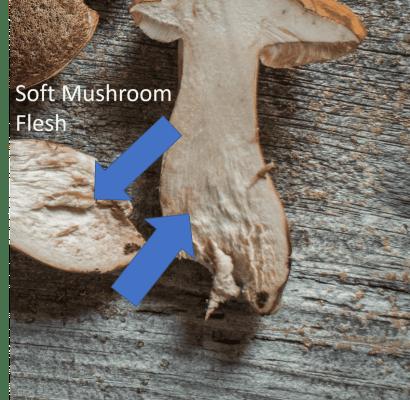 Soft mushroom flesh of a Tylopilus mushroom