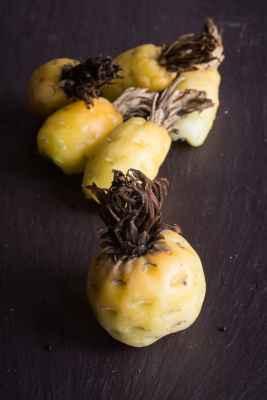 Foraged barrel cactus fruit