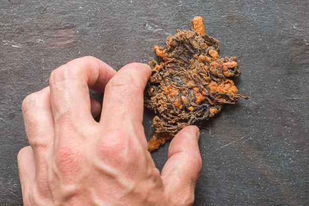 Crown Coral Mushroom and Parmesan Crackers