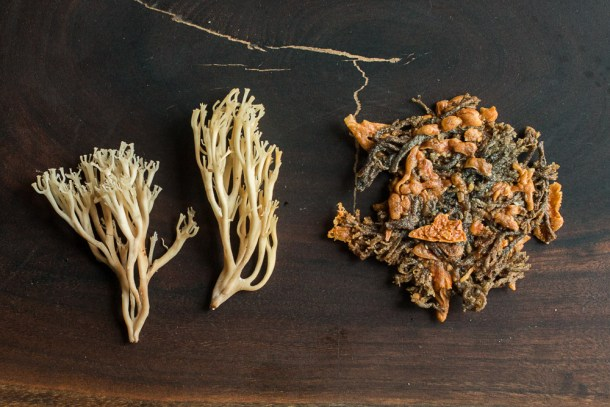 Crown Tipped Coral Mushroom or Artomyces pyxidatus Croutons or Cheese Crackers