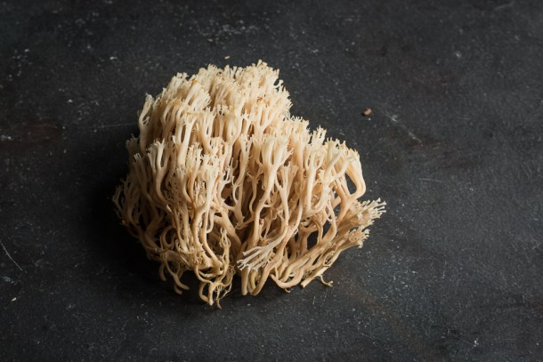 Crown Coral Mushrooms or Artomyces pyxidatus