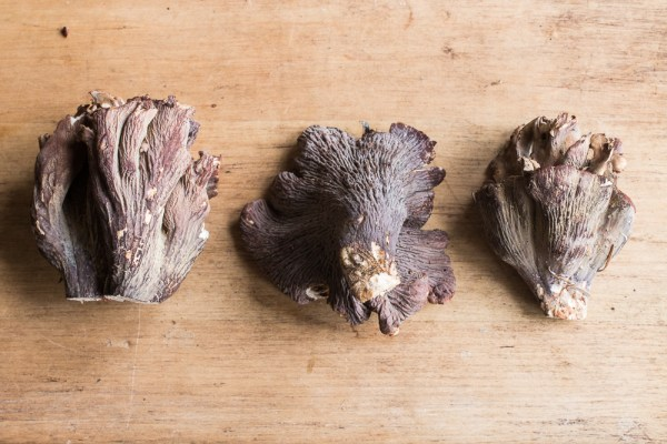 Edible pig ear mushrooms or gomphus clavatus (5)