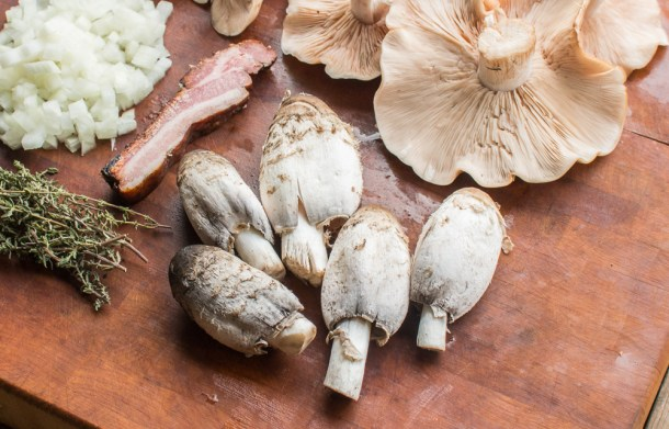 Rabbit Chasseur Recipe with Blewits and Shaggy Mane Mushrooms