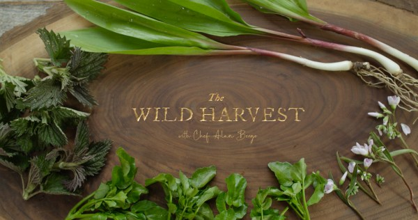 The Wild Harvest with Chef Alan Bergo Title Screen. Images by Jesse Roessler.