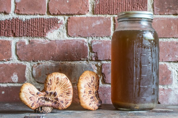Dryad saddle or pheasant back mushroom broth recipe