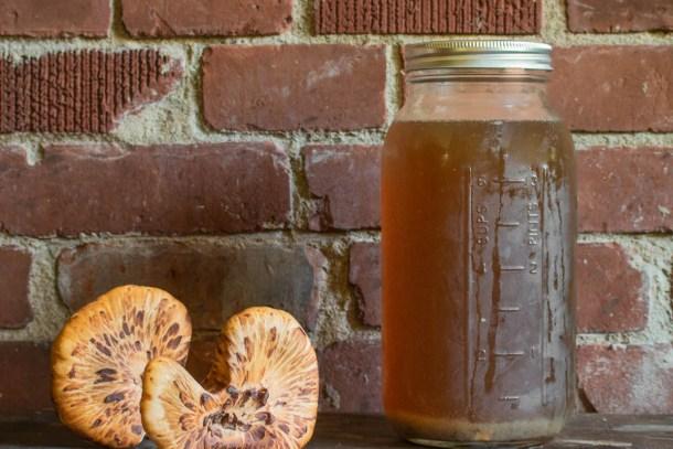 Dryad saddle or pheasant back mushroom broth recipe