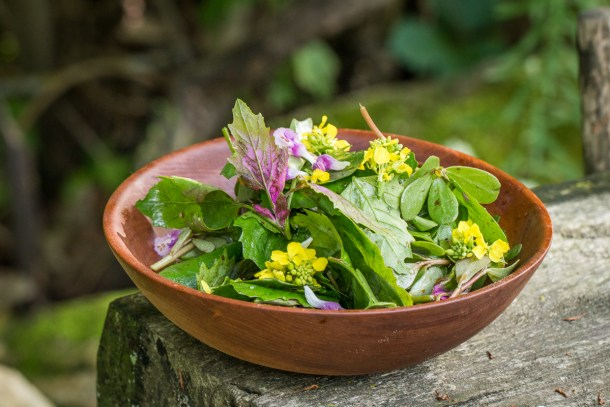 Foraged lambsquarters or wild spinach salad recipe
