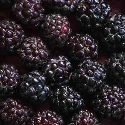 Wild black cap raspberry frango dessert recipe