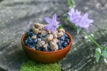 Wild blueberries with sweet fern custard sauce and hazelnut amaretti recipe