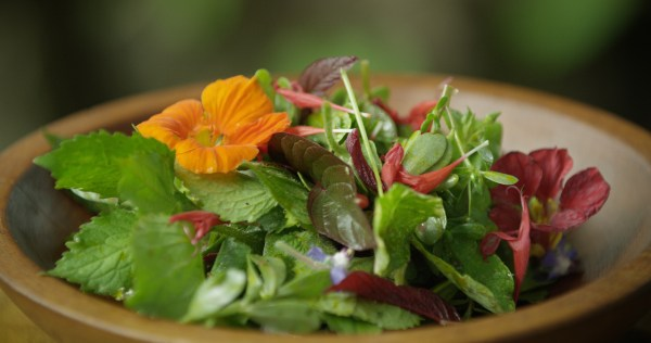Foraged lambs quarters salad. Image by Jesse Roesler.
