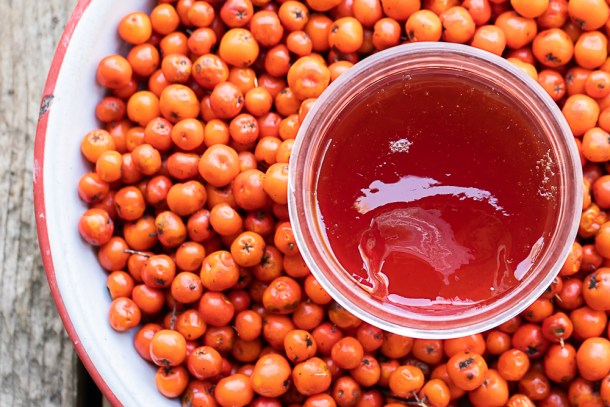 Rowanberry jelly or mountain ash berry jelly