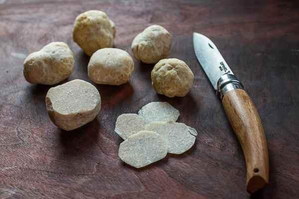 Hungarian Honey truffles or Mattirolomyces terfezioides