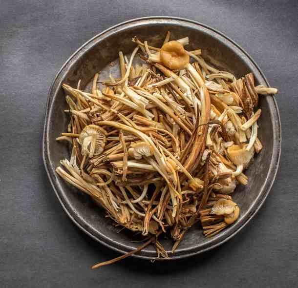Wild enoki mushroom clones or Flammulina velutipes stems
