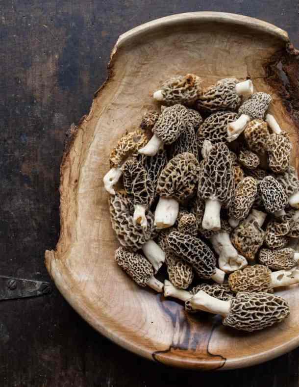 Morel mushrooms from Minnesota