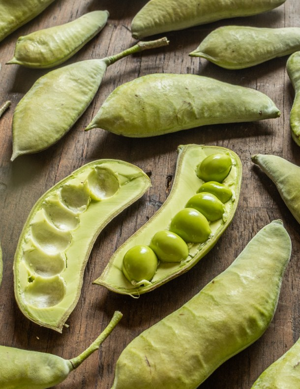 Green Kentucky Coffee Beans