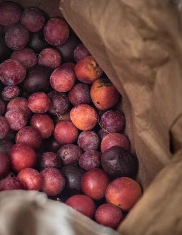 Ripening wild American plums