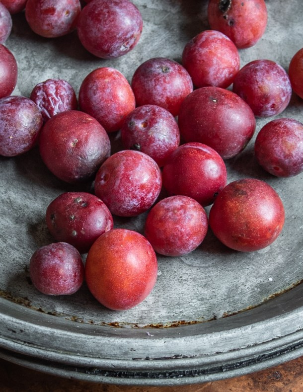 Ripe wild American plums