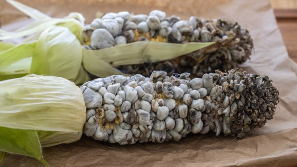 Farmed or cultivated huitlacoche