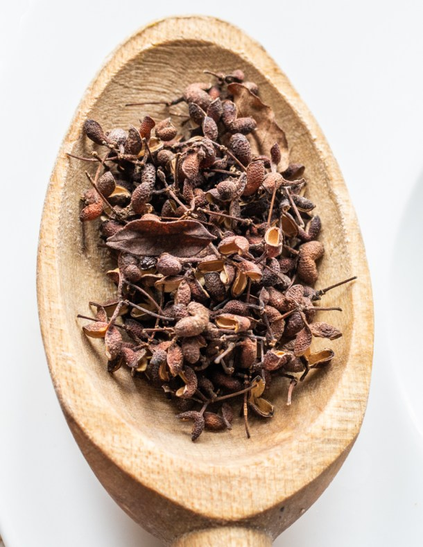 Dried wild Szechuan peppercorns or Xanthoxylum americanum