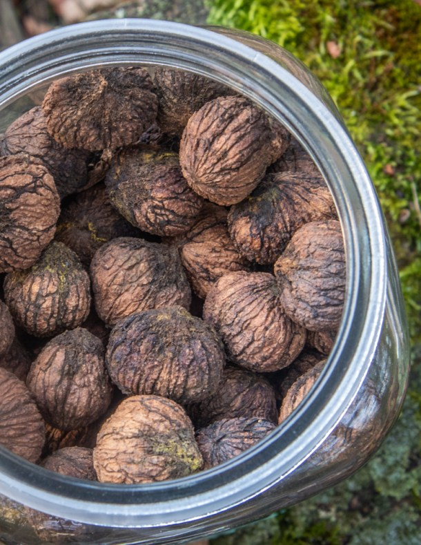 Cured black walnuts from 2021