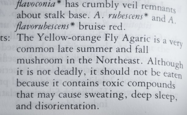 Description of Amanita muscaria in a field guide as being poisonous
