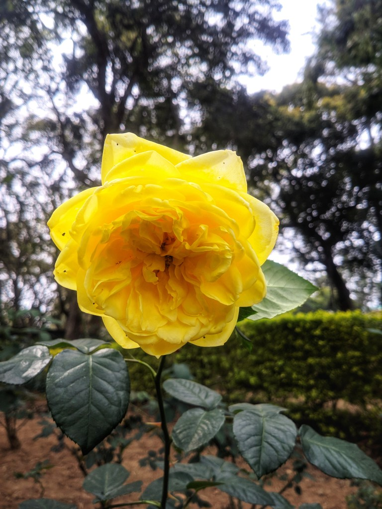 Rose Garden, Yercaud