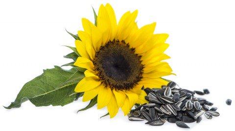 Seminte-de-floarea-soarelui-10-alimente-pentru-o-piele-sanatoasa