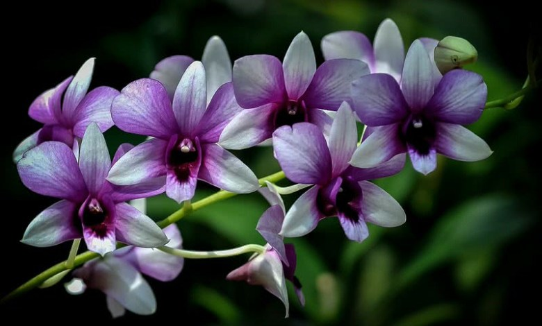 Photo of Most Beautiful Plants For Color