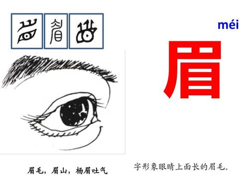 eyebrow in Chinese